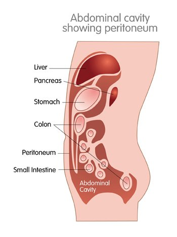 Illustrated image of abdominal cavity and peritoneum